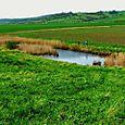 Marsh Pond