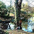 Duck & tree