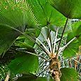 A fan of palms
