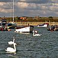 Swans at Keyhaven
