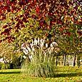 Autumnal Pampas