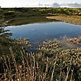 Mudflat lagoon