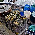 Lichen and nets