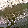 A tree by the lake
