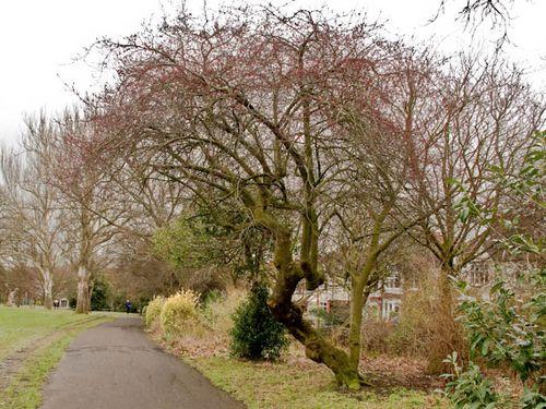 Brockwell pathway