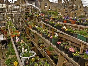 Stacks of flower pots