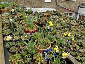 Roof garden (2)