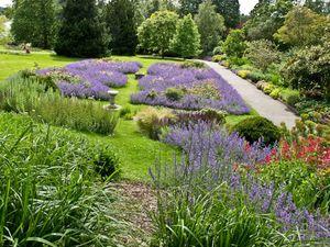 Lavender slope