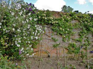 Garden wall & dry soil