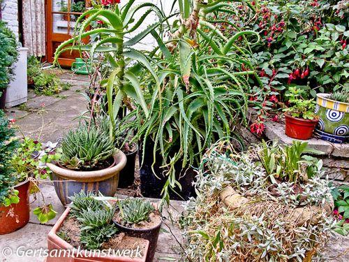 Aloe & Cactus