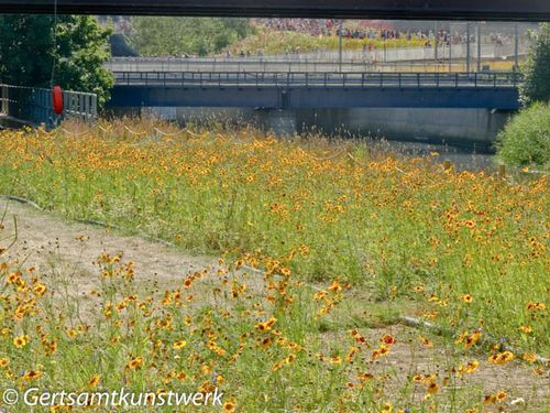 Wildflowers, bridge & crowds