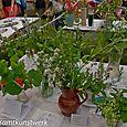 Herbs, 3 cultivars