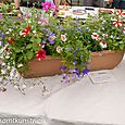 Collection of plants in a trough