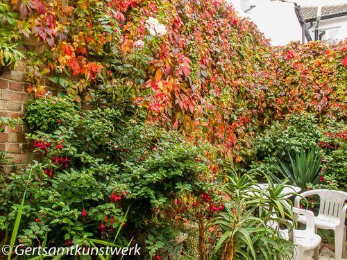 Abundant leaves