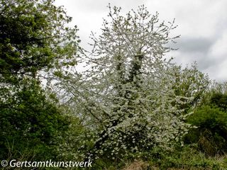 Wilderness blossom