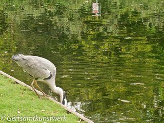 Heron (4)