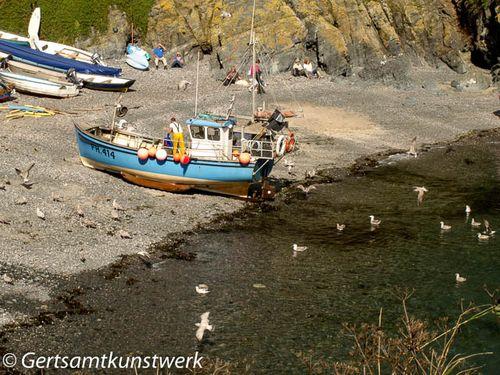 Gulls hovering