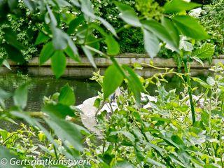 River Ravensbourne (2)
