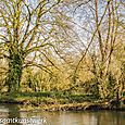 Branch in river