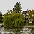 Turrets and willow