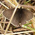 Moth - unidentified