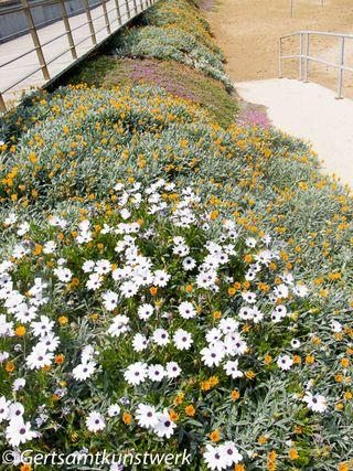 Pernera flowers