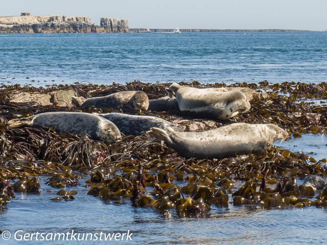 Basking seals