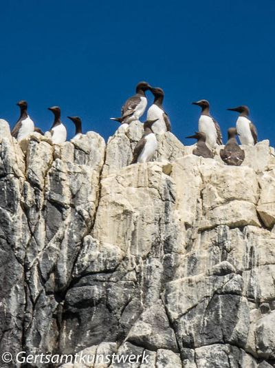 Clifftop cormorants