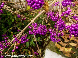 Branch of purple