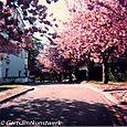 Cherry Tree Hill
