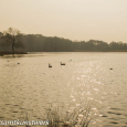 Misty ponds