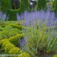 Squares of lavender