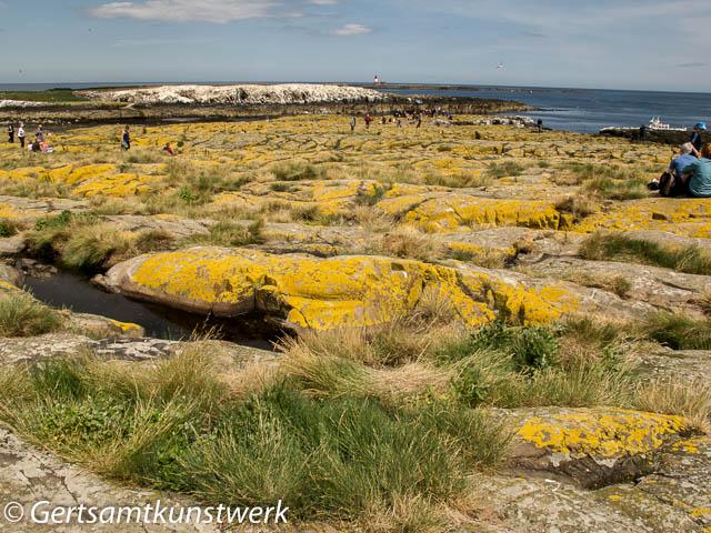Lichen on staple island