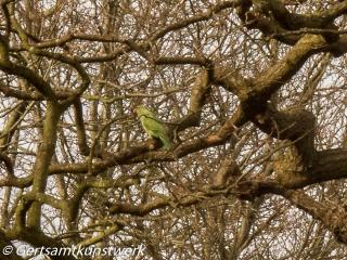 Parakeet March