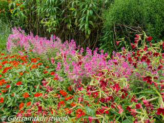 Shades of red and pink