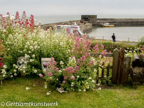 Flowers at Harbour