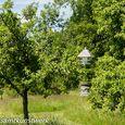 Beehive in meadow