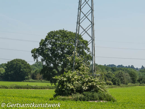 Pylon growth