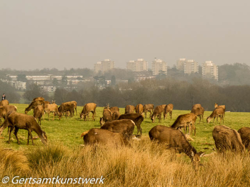 Deer and Roehampton skyline March