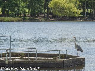 Heron June