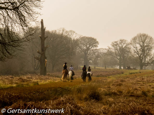 Horses in Richmond Park March