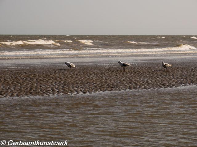Social distancing seagulls