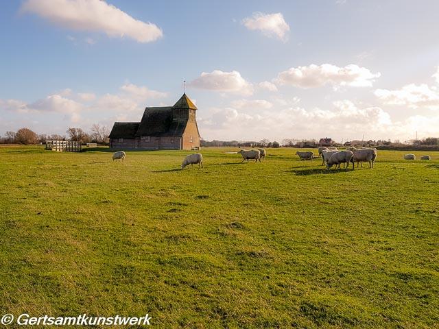 Church and sheep