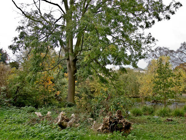 Autumn in Brockwell Park