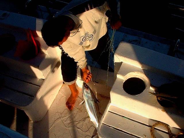 Landing tuna