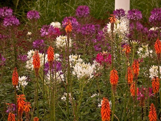 Kew Gardens Flowers