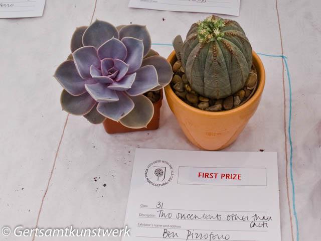 2 succulents