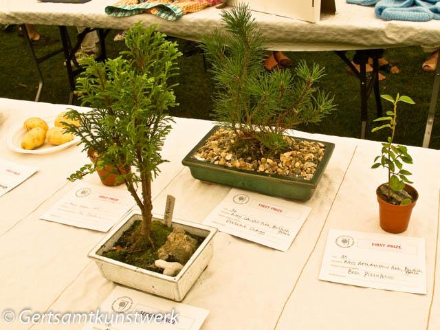 Conifer and deciduous