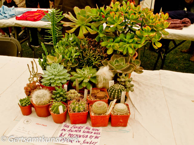 Group of cacti