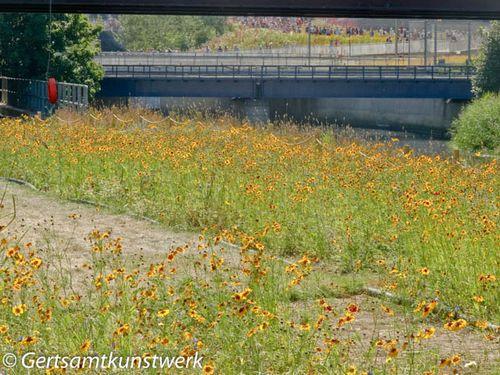 Wildflowers, bridge & crowds